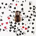 意大利客定黑尖晶与珍珠母贝 Poker Cards 系列